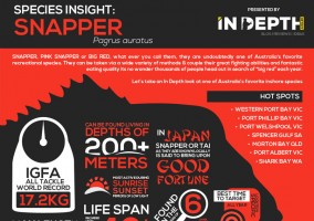 snapper_infograph_feature_image