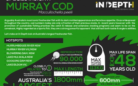 cod_infograph_feature_image