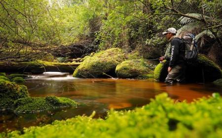 Victorian trout stream