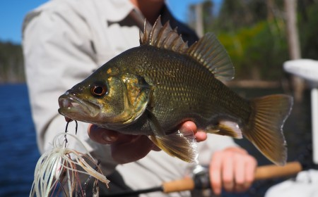 Blue Rock Dam Bass Fishing