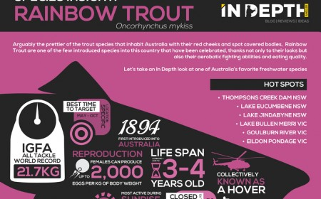 Rainbow Trout Infograph
