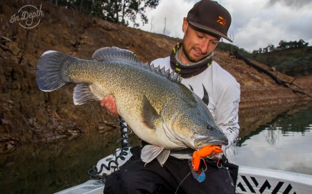 Thristy lure murray cod